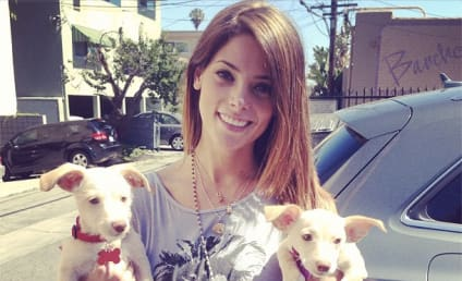 Ashley Greene Shows Off New Puppies
