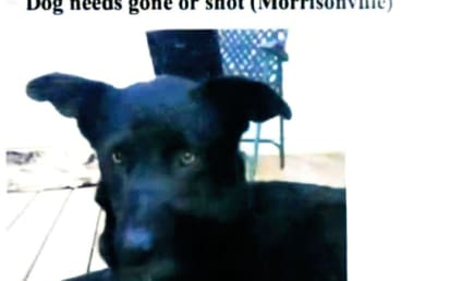 Woman Responds to Craigslist Ad, Saves Dog from Being Shot