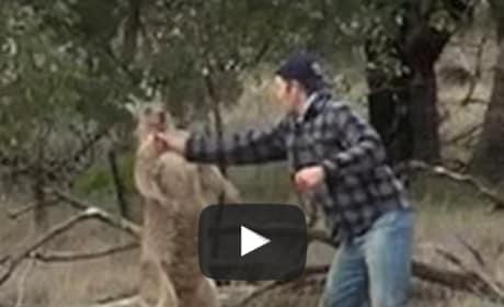 Man Punches Kangaroo, Saves Dog in Australia