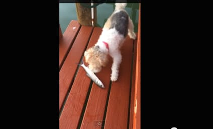 Dog Sniffs Fish, Discovers Animal is Still Alive