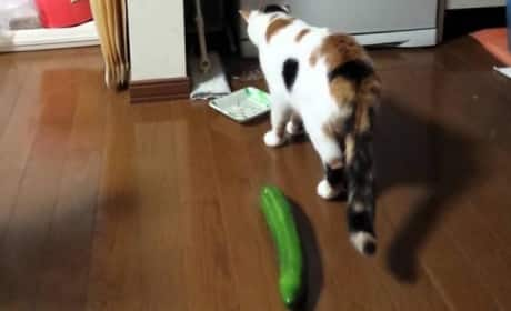 Cat Reacts in Shocked Terror to a Cucumber