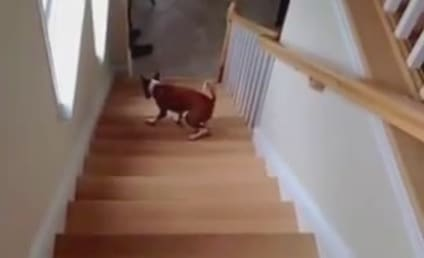 Dog Backpedals Upstairs, is Frightened and Adorable
