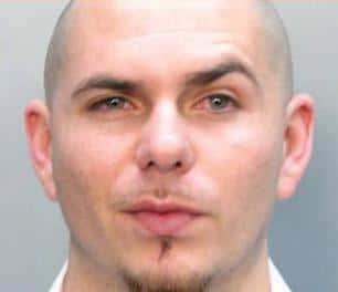 Pitbull Mug Shot