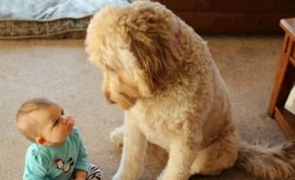 Baby Takes on Dog in Epic Staring Contest: Who Will Win?!?