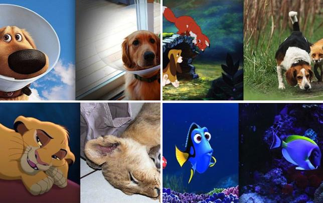9 disney animals found in real life up