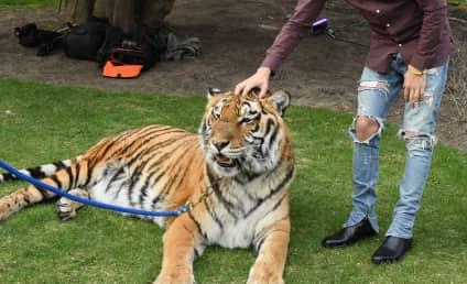 18 Times PETA Has Stuck It to Celebrities
