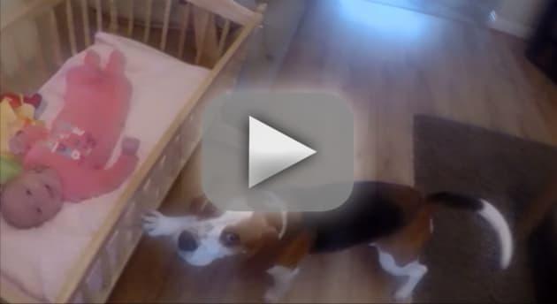 Dogs Rocks Baby to Sleep