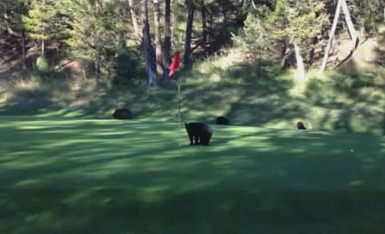 Baby Bear Plays with Flag Stick, Steals Golf Ball, Is Generally Awesome