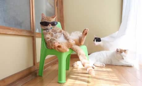 Cat in Sunglasses is A Lot Cooler Than You'll Ever Be