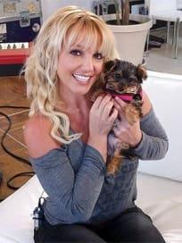Britney Spears, Dog Hannah