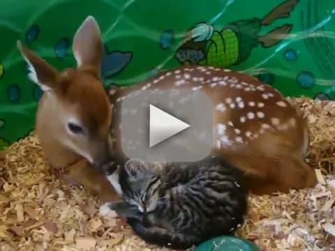 Deer Licks Kitten
