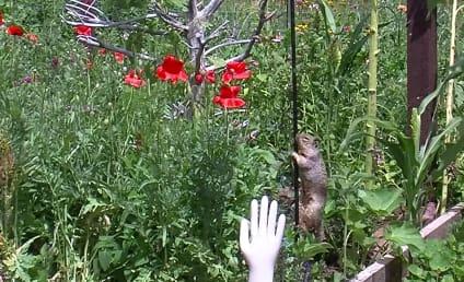 Squirrel Attempts to Raid Bird Feeder, Gets Thwarted by Vaseline