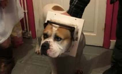 Horny Dog Attempts to Mate, Gets Stuck in Tiny Door