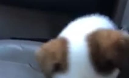 Dog Barking at Own Hiccups is Guaranteed to Make Your Weekend