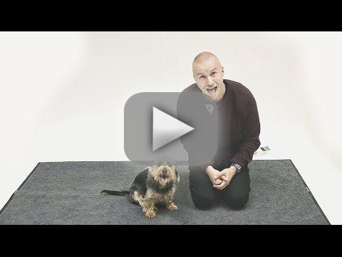 Dogs React to Human Barking