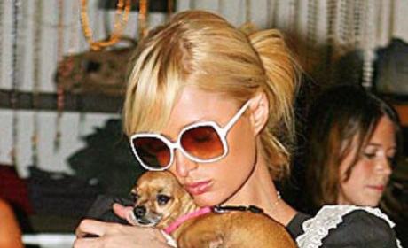 Paris Hilton, Tinkerbell