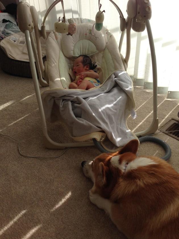Watching Owner Sleep
