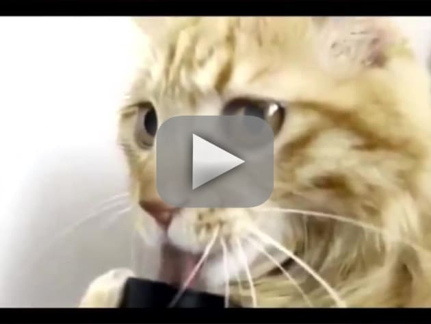 Cat Licks Vacuum Cleaner, Holds it Like Bong