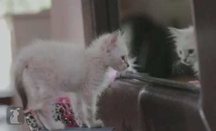 Girls Parodied by Cats: Watch Now!