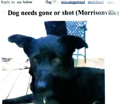Woman Responds to Craigslist Ad, Saves Dog from Being Shot ...