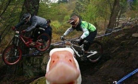 Duck Photobomb