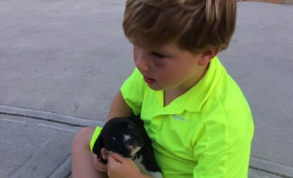 Kim Zolciak: SLAMMED For Giving Pit Bull Puppy to Son as Gift!