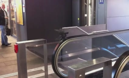 Pigeon Tries, Fails to Rest on Escalator
