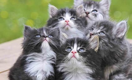 Cats Kill Billions of Animals a Year, Study Finds