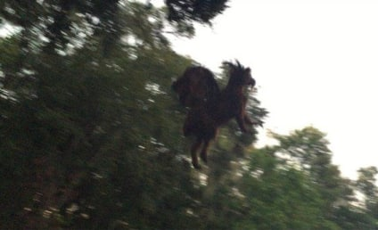 Jersey Devil: Does This Pic Prove It's Real?!